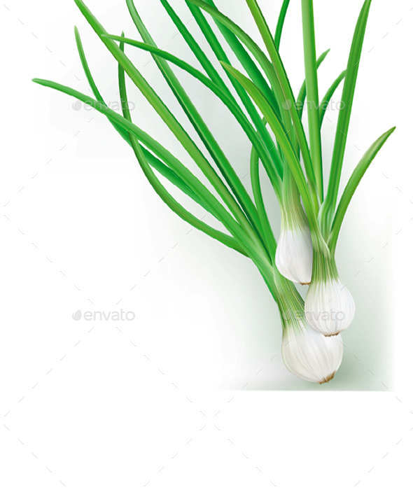 GraphicRiver Green Onions 11629053