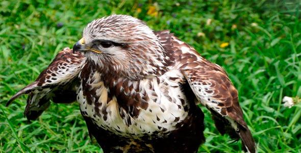 Bird & Eagle