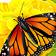 Monarch Butterfly on the Flower - GraphicRiver Item for Sale