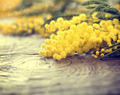 Mimosa spring flowers on the wooden table - PhotoDune Item for Sale
