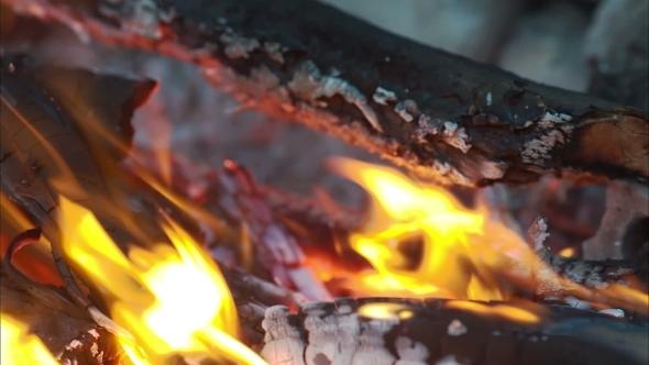 VideoHive Bonfire Campfire 11660562