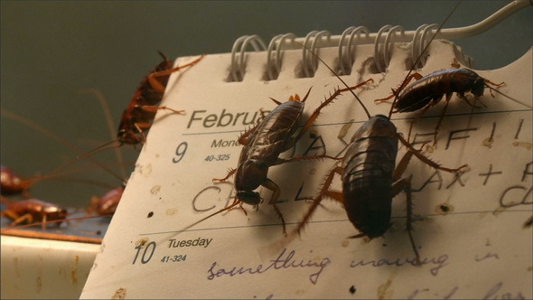Lots of Dirty Cockroaches are on a Calendar