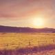Field on sunset - PhotoDune Item for Sale
