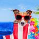 dog summer holiday vacation - PhotoDune Item for Sale