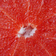 cut grapefruit - PhotoDune Item for Sale