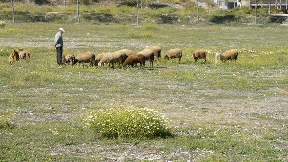 Spanish Rural Shepherd