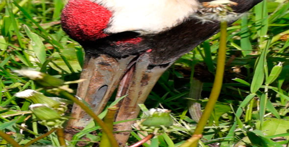 Bird Shadoof