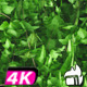 Ivy Transition Vertical Garden - VideoHive Item for Sale