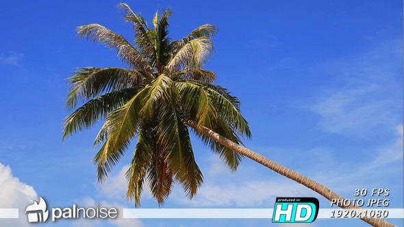VideoHive Palm Tree Beach Paradise Dream 11687549