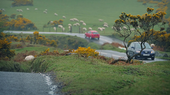 VideoHive Cars Passing In Farmland Near Flock Of Sheep 11694041