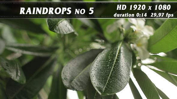 VideoHive Raindrops No.5 11704774