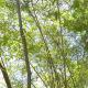 Tree - 16
