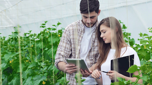 Guy Shows A Girl On The Tablet Healthy Plants