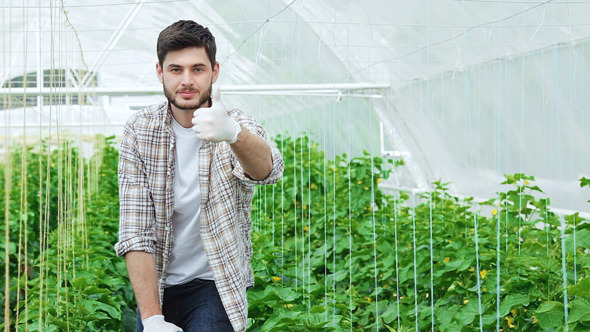 Guy Worker In A Greenhouse Thumbs Up