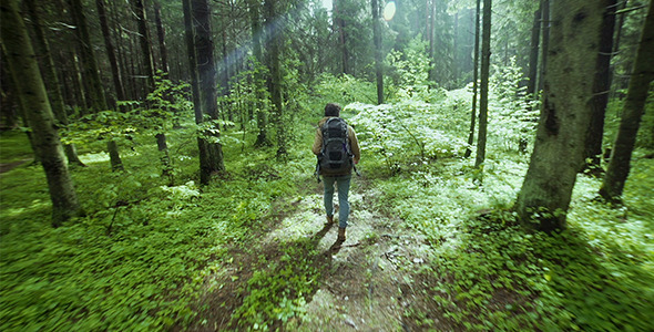 Hiking In The Beautiful Green Summer Forest