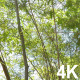 Tree - 25