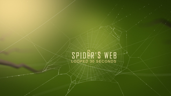 VideoHive Swaying Spider s Web 11724721