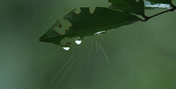 VideoHive Leaf in The Rain 4a 11734905