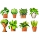 A Collection of the Different Pot Plants