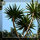 Tropical Trees - VideoHive Item for Sale