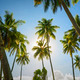Sunrise Towering Trees - PhotoDune Item for Sale