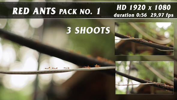 Red Ants Pack