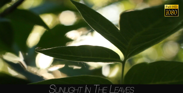 Sunlight In The Leaves 57