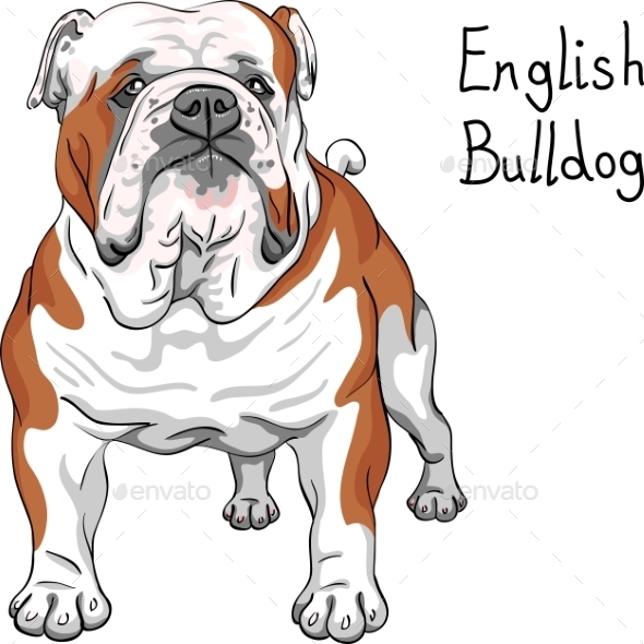 GraphicRiver English Bulldog Breed 11770087