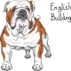 Hipster Dog English Bulldog Breed