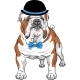 Hipster Dog English Bulldog Breed - GraphicRiver Item for Sale