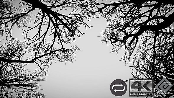 Camera Moves Under Dead Trees