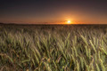 Wheat Field at Sunset - PhotoDune Item for Sale