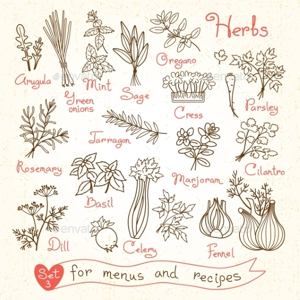 GraphicRiver Set Drawings Of Herbs For Design Menus Recipes 11775776