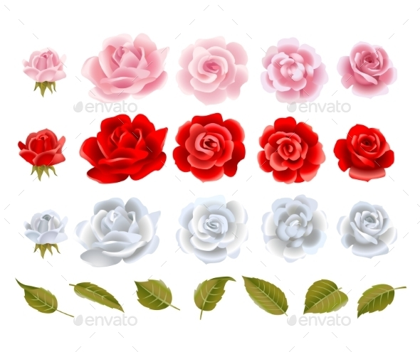 GraphicRiver Roses 11780229