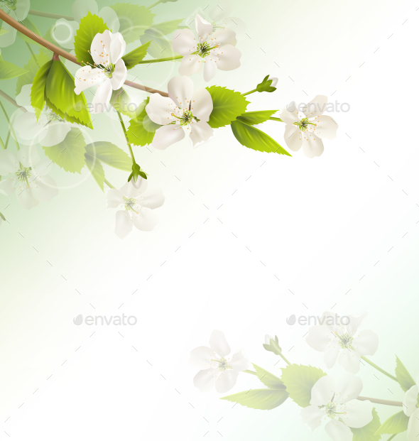 GraphicRiver Cherry Branch with White Flower on Green Background 11789647