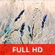 Dreamy Summer Field - VideoHive Item for Sale