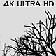 Camera Moves Under Dead Trees - Horizontal - VideoHive Item for Sale