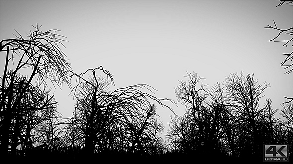 Dead Forest Black and White