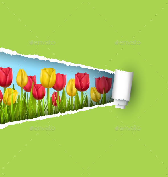 GraphicRiver Grass Lawn with Yellow Red Tulips and Ripped Paper 11797189