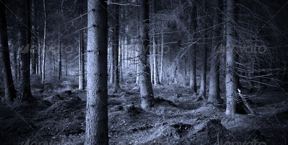 PhotoDune Spooky forest 1185960