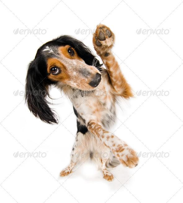 PhotoDune Hello dog 1194620