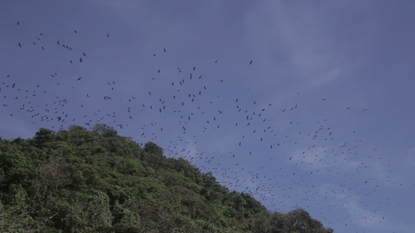 VideoHive Flying Foxes On Sland Of Boracay 11814802
