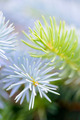Two fir branches close-up shot - PhotoDune Item for Sale