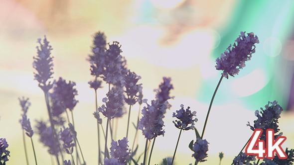 Dark Purple Bokeh Flowers