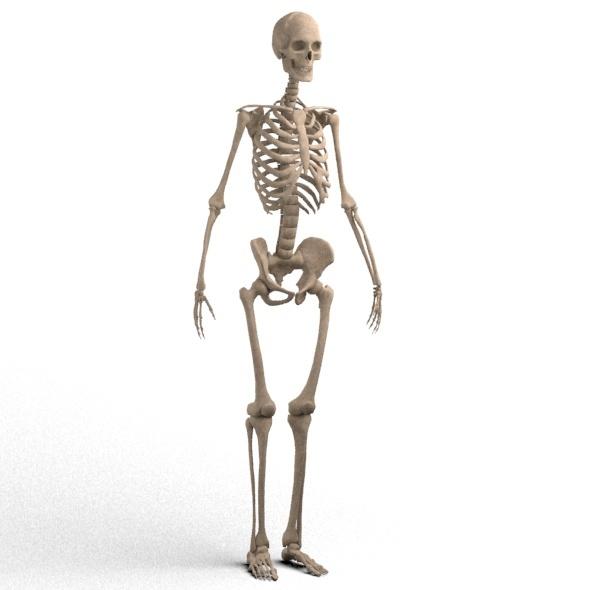 3DOcean realistic skeleton 11827196