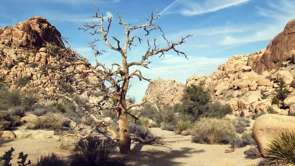VideoHive Barren Tree 11834525