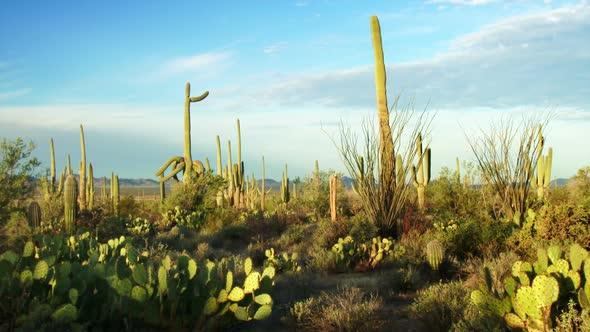 Saguaro National Park 1
