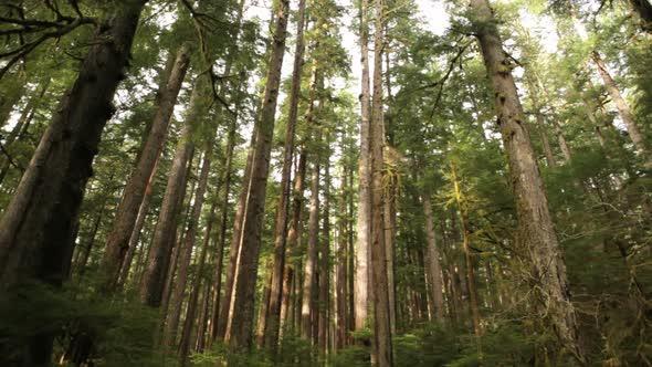 VideoHive Rainforest 11834601