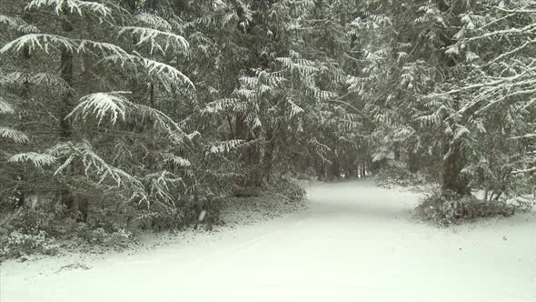 Snow Covered Forest Road In Winter
