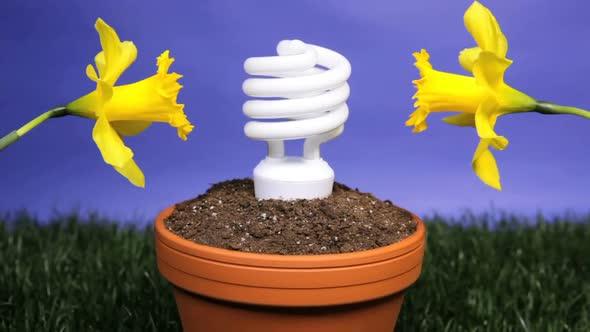 Energy Saving Light Bulb Planted 1